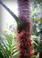 Biliran Philippines Travel. Thorns