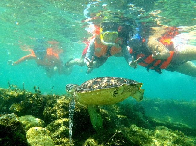 Apo Island Snorkeling with Pawikans Sea Turtles. Dauin, Negros. Itinerary Weekend Guide.