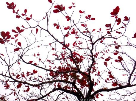 Poetry in Nature. mytraveldigest.wordpress.com