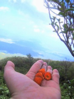 Wild Berries. Poetry in Nature.