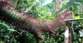 Thorns. Mauyog Day Hike