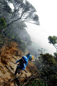 Mt. Kinabalu Summit Climb via Timpohon Gate
