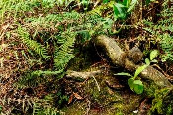 Mountain Squirrel of Mt. Kinabalu