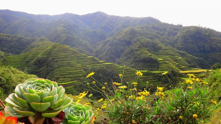 how we traveled by bus from manila to ifugao rice terraces banaue